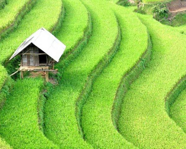 Circuit indispensable au Nord du Vietnam en 26 jours