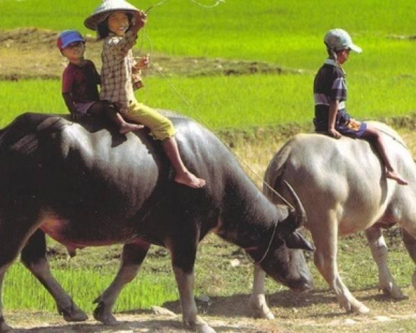 Images du Vietnam en 3 semaines