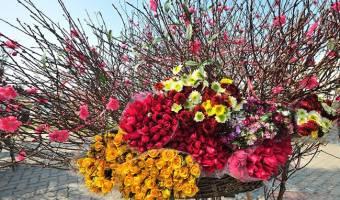 Les fleurs de la fête du Têt au Vietnam