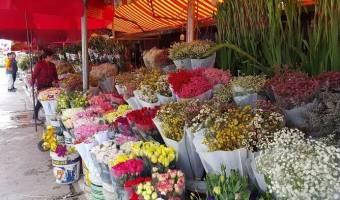 Les marchés aux fleurs du Têt à Hanoi au Vietnam