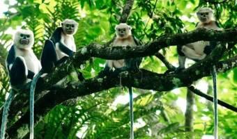 Top 5 parcs nationaux les plus célèbres du Vietnam
