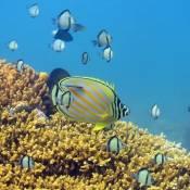 Plongée Vietnam: les meilleurs sites de plongée au Vietnam