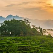 Réserve naturelle de Pu Luong, destination idéale pour les amoureux de la nature